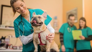Why veterinarians want you to consider pet insurance