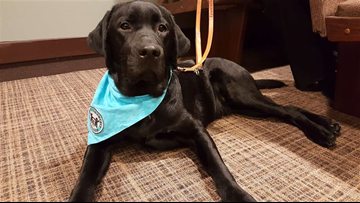 New therapy dog joins Ottawa County Prosecutor's Office