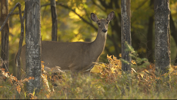 Bill dictates hunting, not sterilization to control deer populations