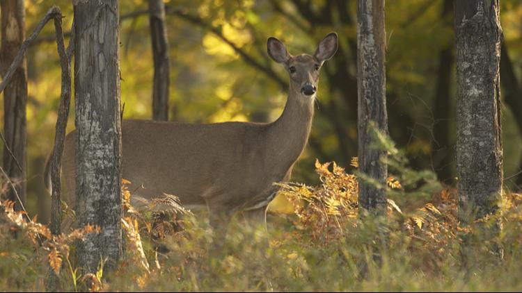 Jury convicts Michigan man who said he didn't need deer license