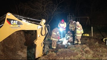32-year-old horse rescued after being trapped in a sinkhole up to her head, later put down