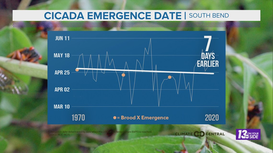 Will Warmer Weather Bring Brood X Cicadas Sooner?