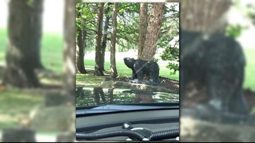 Walker Police share 'fake bear' call, ask community to stop looking for black bear in area