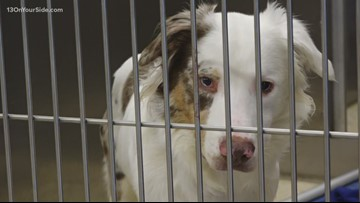 Kent County Animal Shelter has unusually high number of animals