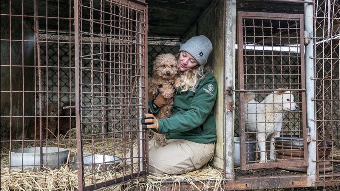 Dogs rescued from South Korean dog meat and puppy mill farm arriving in West Michigan