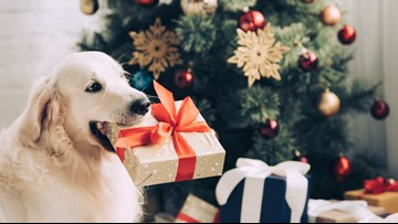 Nine ways to include your pet in the holiday fun