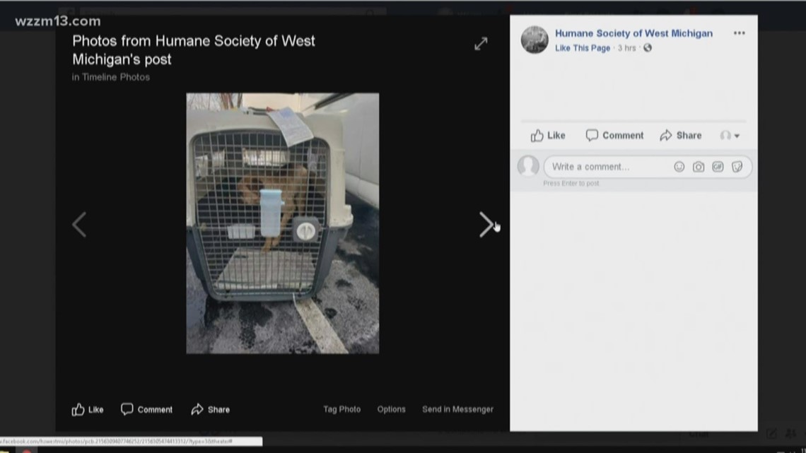 Dogs rescued from dog meat, puppy mill in South Korea arriving in West Michigan