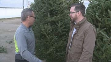 Greenthumb: O Christmas Tree!