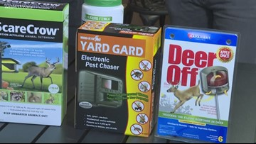 Protecting your yard from pesky pests!