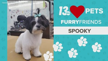 13 Loves Pets: Spooky at the groomers