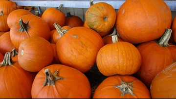 On the Menu: Pumpkin is more than a Halloween decoration