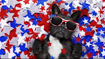 Having a panic-free 4th of July with your pets