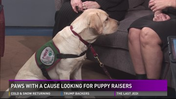Paws With A Cause looking for puppy raisers
