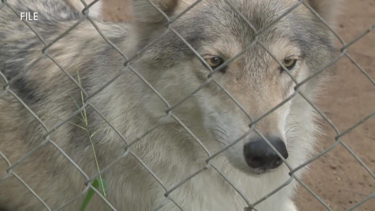 Civil trial against Howling Timbers Animal Sanctuary begins Monday