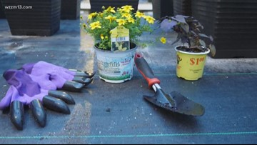 Getting into the garden? Check out 'Garden Genie Gloves'
