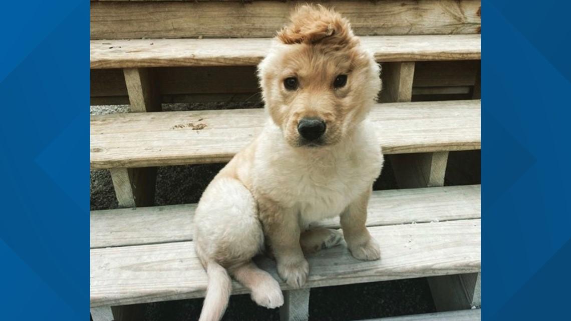 West Michigan 'unicorn' pup goes viral around the world