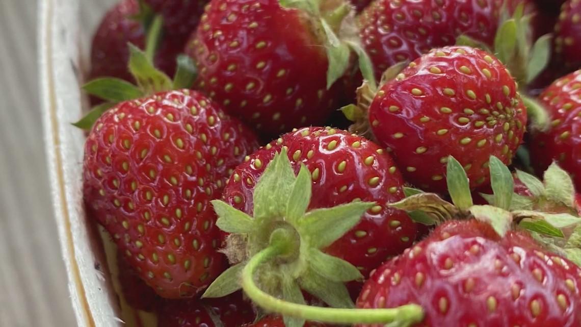 Strawberry season in West Michigan