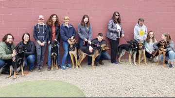 Dog family reunited a year after being abandoned