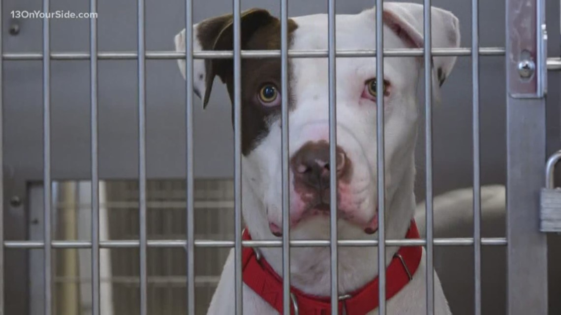 Empty the Shelters event is back, adoption fees only $25
