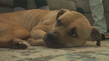 Muskegon family reunites with dog after searching for a month