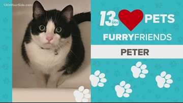 13 Loves Pets: Peter, a tub loving cat!