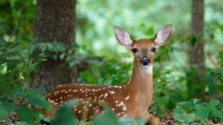 Michigan adopts deer hunting rules to halt fatal disease