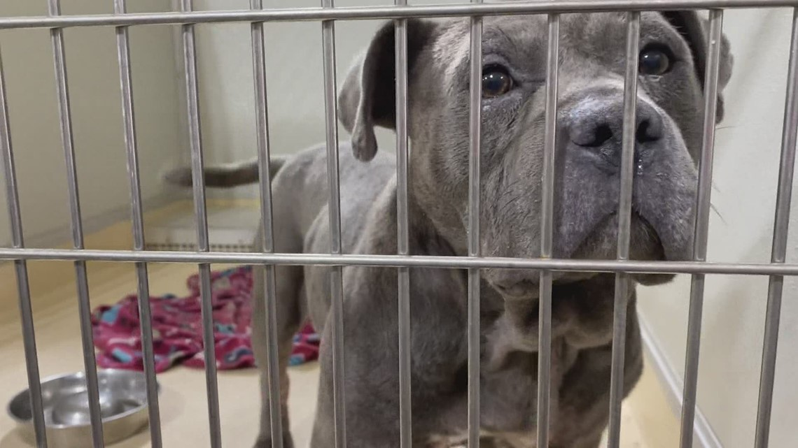 Pound Buddies in Muskegon provides tips for keeping pets safe on the Fourth of July