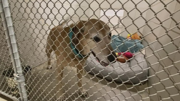 Community resources for pet parents at local animal shelters