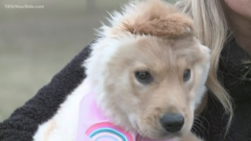 Viral 'unicorn' pup is from West Michigan