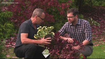 Changes coming to your garden during fall