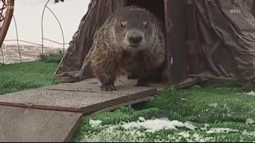13 on Target Weather: Groundhog Day