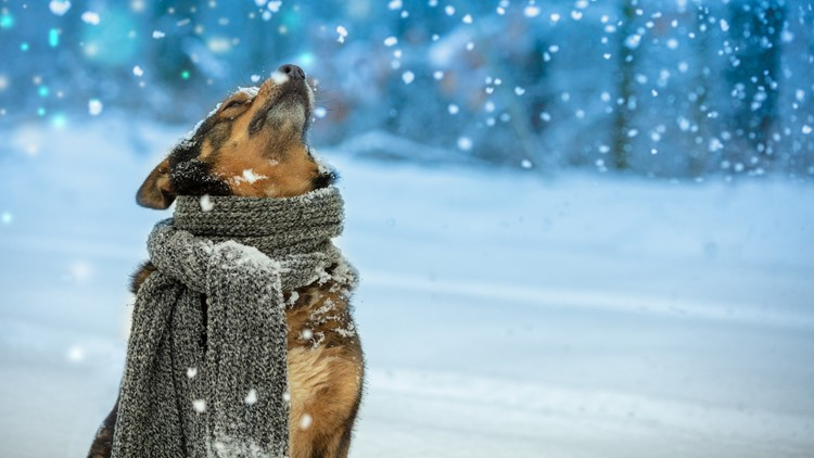 Seven winter safety tips for protecting pets