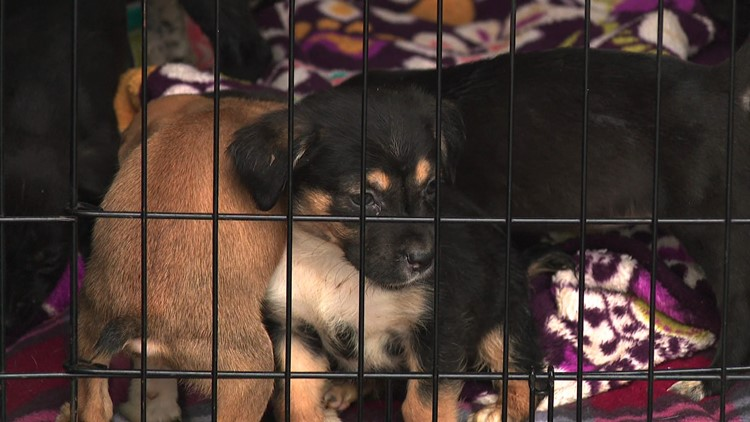 Bissell Pet Foundation, local shelters team up to rescue more than 150 pets