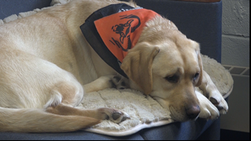 North Rockford Middle School welcomes counseling dog