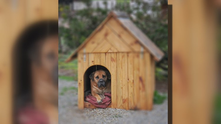 Protecting dogs from weather extremes is aim of proposed legislation