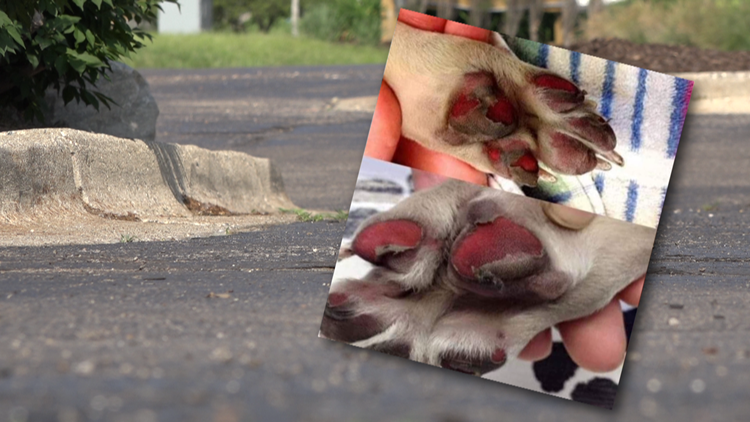 How to protect your dog's paws from hot surfaces during warm weather