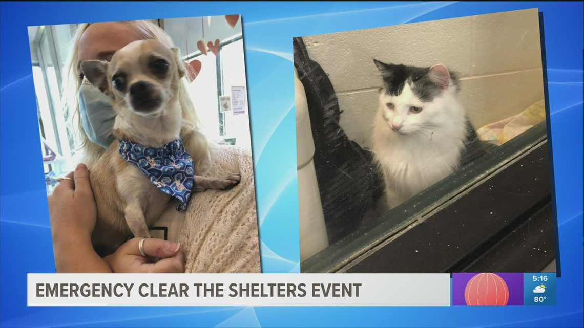 Emergency clear the shelters event