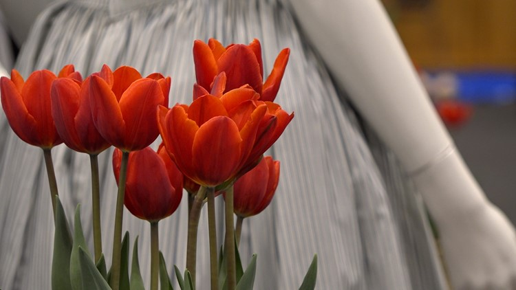 'Feels like home': New Tulip Time event highlights Dutch culture in exhibit experience