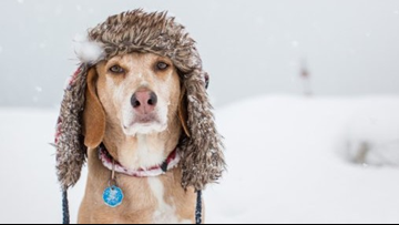 Keeping our pets warm and safe in the cold winter weather