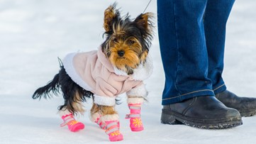 Pet Peeves: Keeping your pets safe and warm in the winter