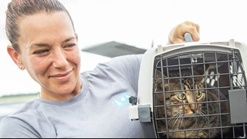 Animals evacuated from Florida shelters arrive in Michigan