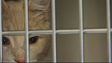 How to help shelters, rescue groups inundated with cats