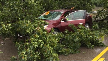 Tree falls on car while man driving down 28th Street