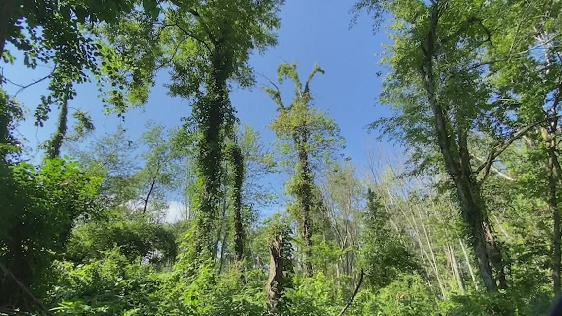 Invasive species taking over Ottawa County
