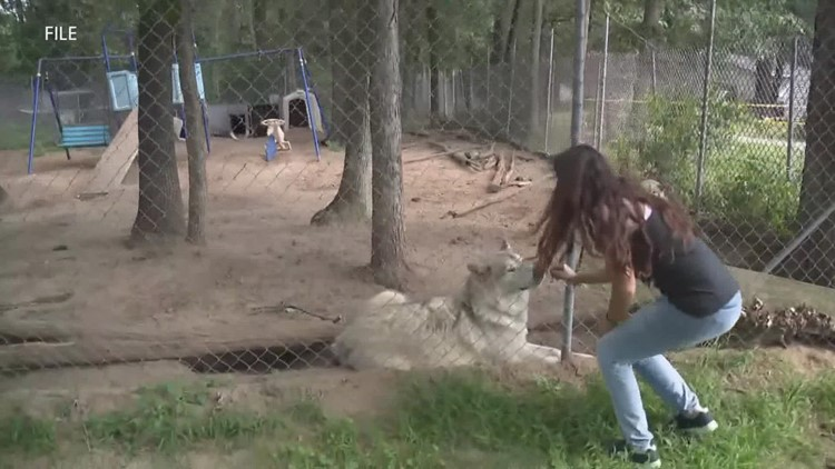 North Carolina facility taking in 4 wolf dogs from Howling Timbers as civil case continues