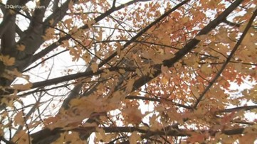 Tips on how to care for your trees before winter