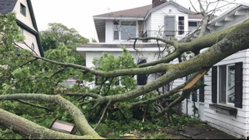 Tree falls on Muskegon man during Saturday's storms