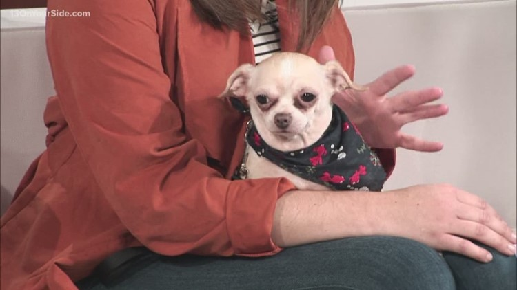 Adopt-A-Pet: Meet Chico!