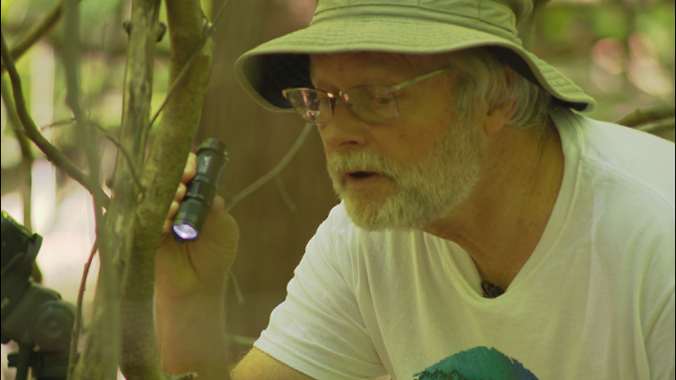 Bob McAndrews uses a pocket flashlight to see where spiders hide.