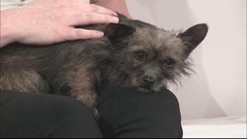 Adopt-A-Pet: Meet Harriette!